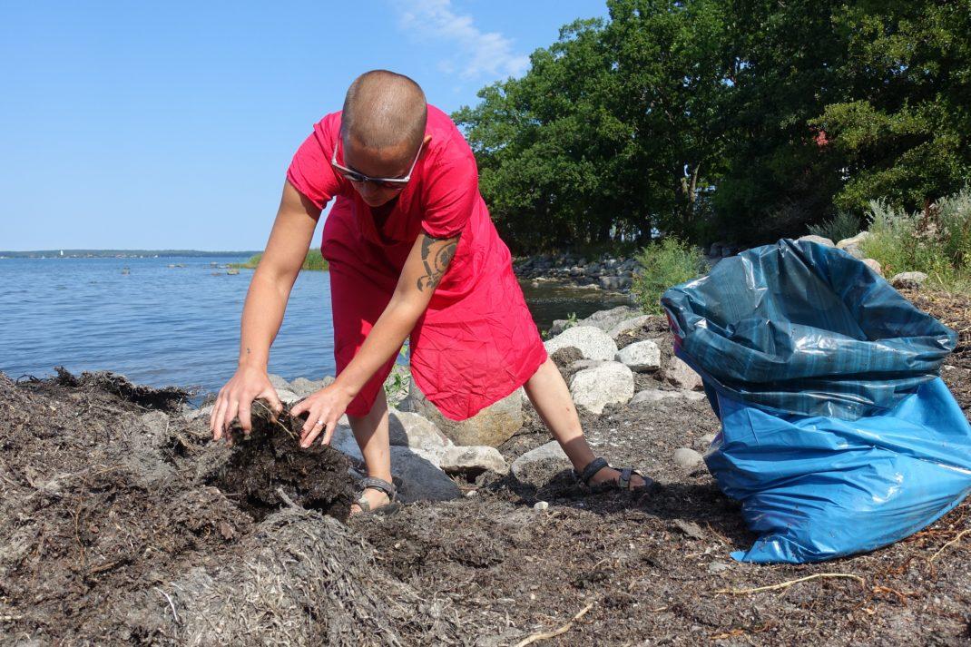 Sara plockar tång på stranden i rosa klänning och packar i blå plastsäck.