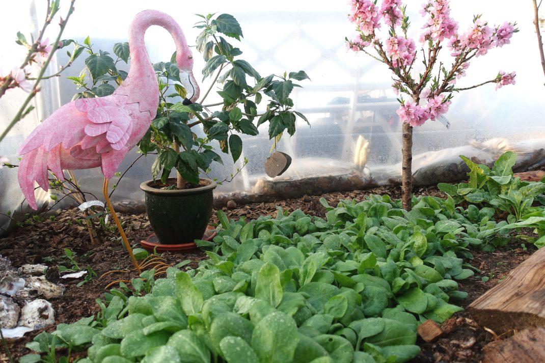 En knallgrön matta av spenat och bredvid en galet rosa flamingo och ett blommande nektarinträd.