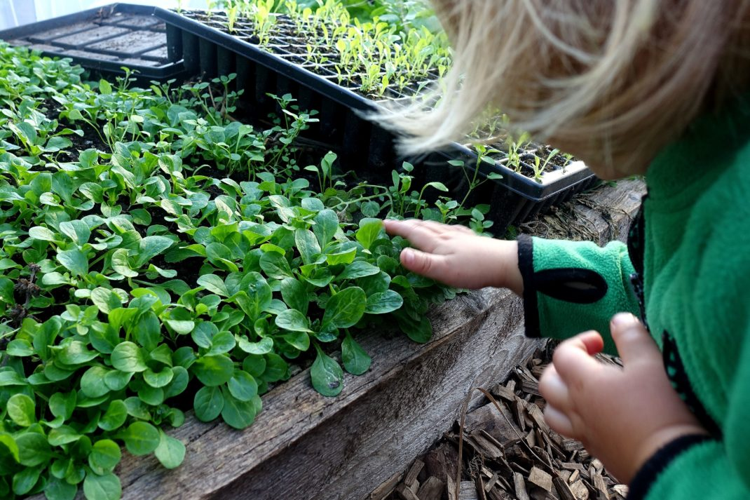 Ett litet barn sitter och klappar på gröna blad som växer i en bädd bredvid.