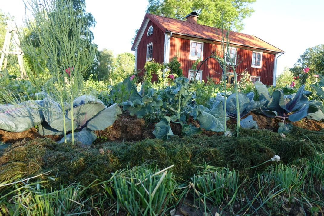 Det växer i trädgården.