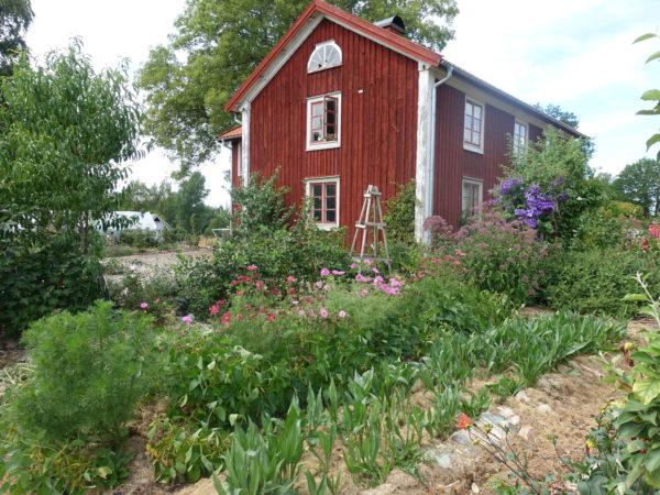 Huset skillnadens i en torr, torr trädgård.