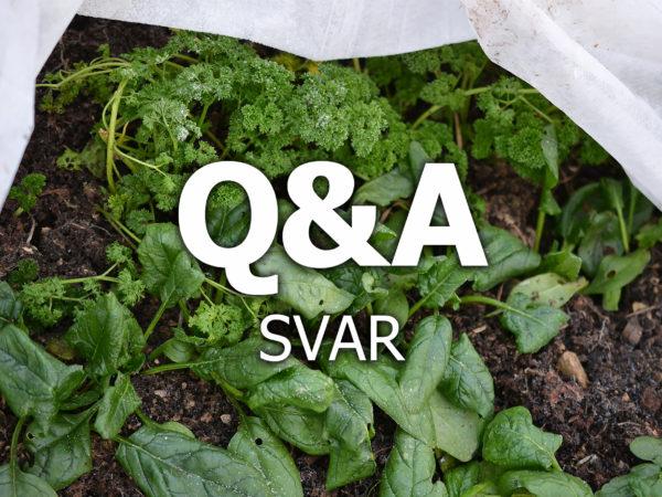 Bladgrönsaker under en fiberduk med texten Q&A svar på.