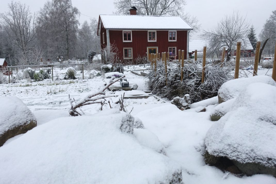 Köksträdgården täckt av snö en gråmulen vinterdag.