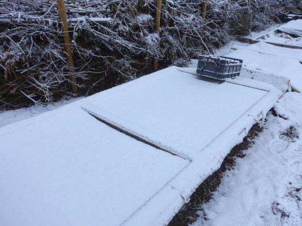 En odlingsbädd täckt av snö och lock på odlingslådor.