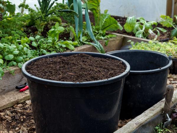 Två svarta hinkar med jord i växthuset.