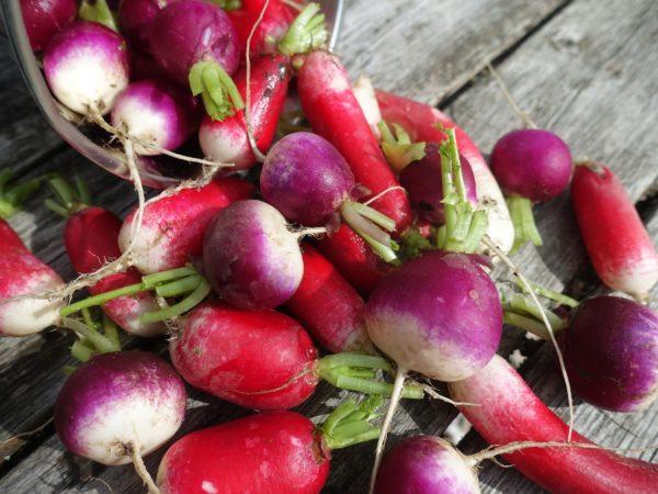 Krispiga röda och lila rädisor ligger på en bräda.