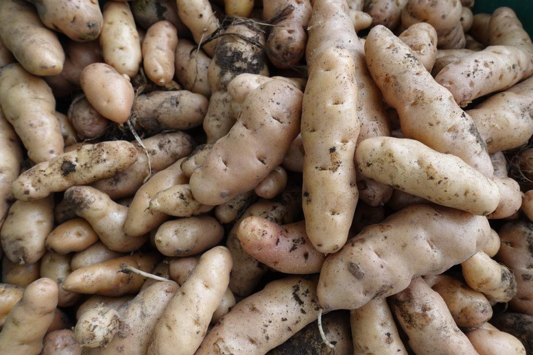 Närbild av läcker potatis.