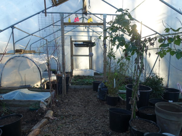 Saras växthus mitt i kalla januari.