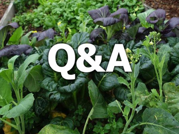 Bild av bladgrönsaker och texten Q&A.