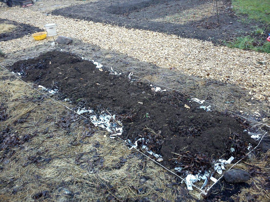 En plätt på jorden omgiven av halm i en alldeles ny köksträdgård.