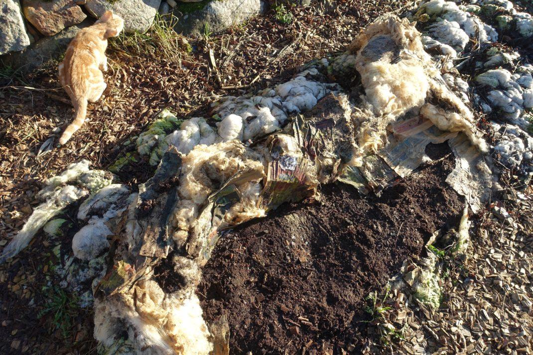 En bädd täckt av ull, där en del av ullen puttats åt sidan och blottar bar jord.