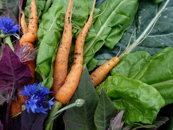 Ett knippe nyskördade grönsaker i olika färger ligger tillsammans.