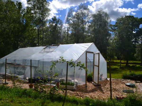 Sara utbyggda tunnelväxthus i härlig vårgrönska.