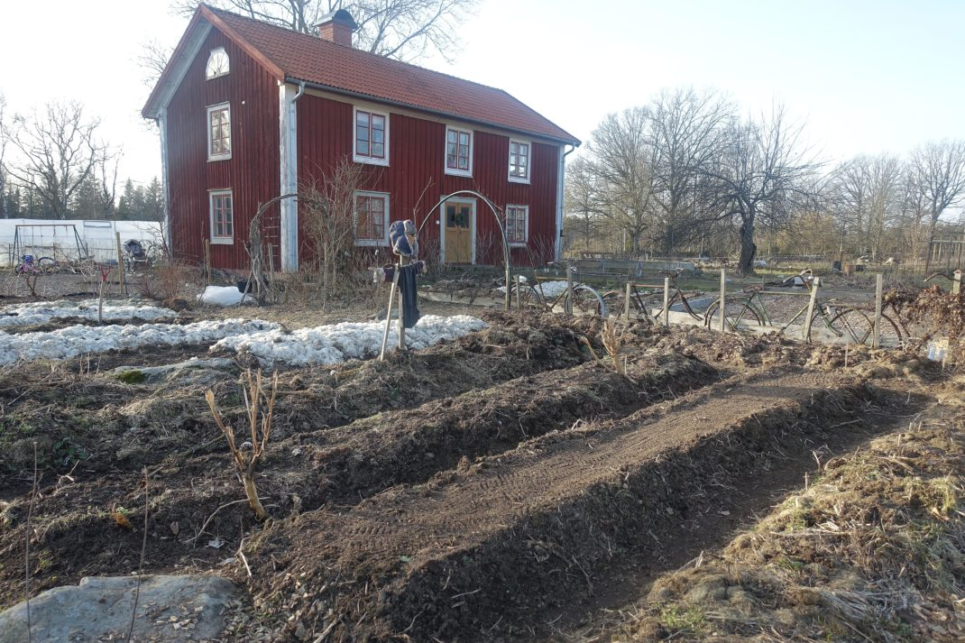 Bild på köksträdgården med ett rött bostadshus i bakgrunden.