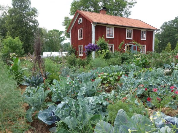 Skillnadens trädgård prunkar av frodiga grönsaker och mitt i ståtar det röda trähuset.