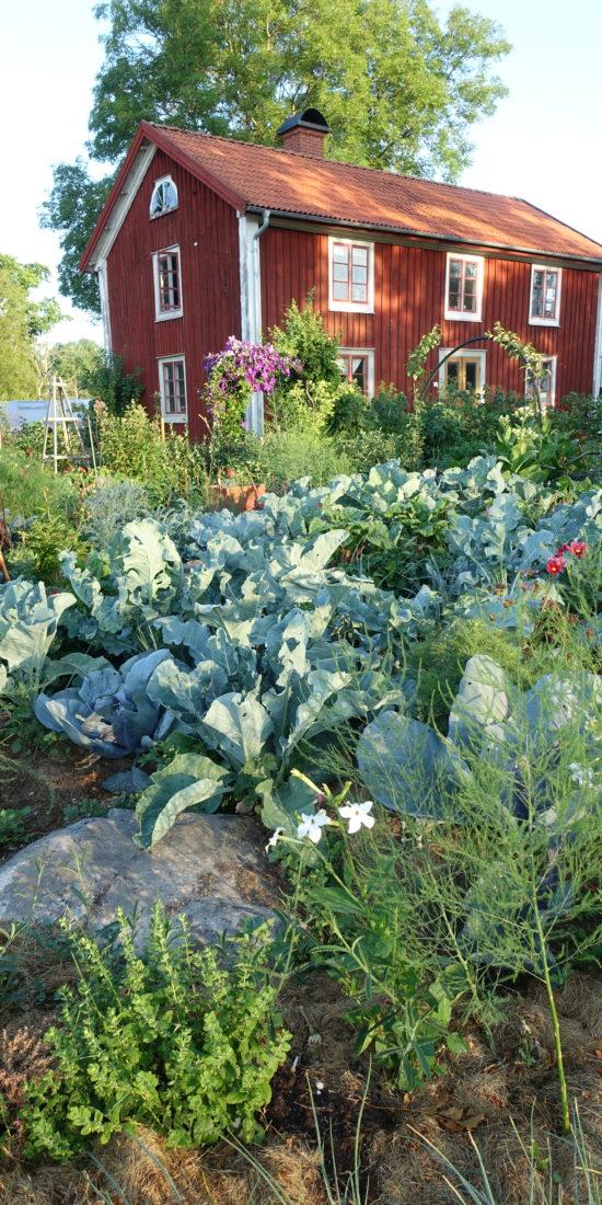 Huset och trädgårdens i Skillnadens.