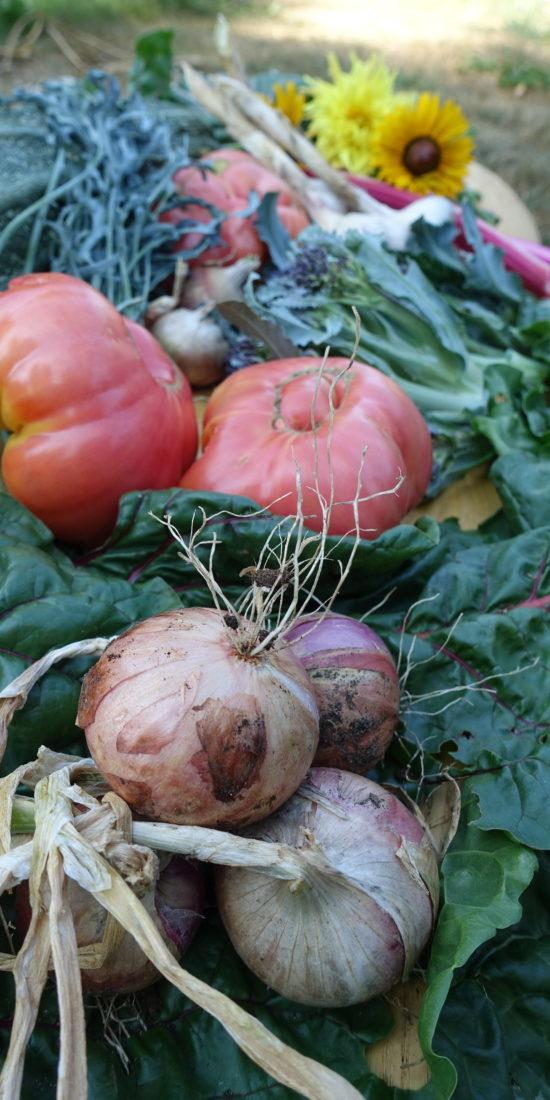Ett vackert stilleben av skörd i form av tomat, kål, bladgrönt, lök och annat gott.