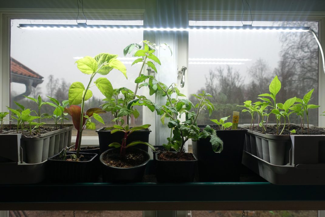 Ett fönster med växter i och en smal ljusramp med sladd över.