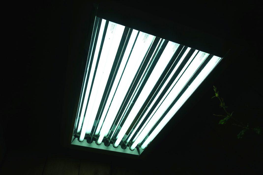 En växtbelysning sedd underifrån, mörkt runtomkring och ljust just där lampan lyser.