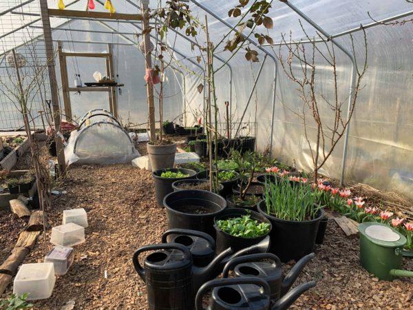 Inne i tunneln blommar tulpaner och spenaten grönsakr i krukor.