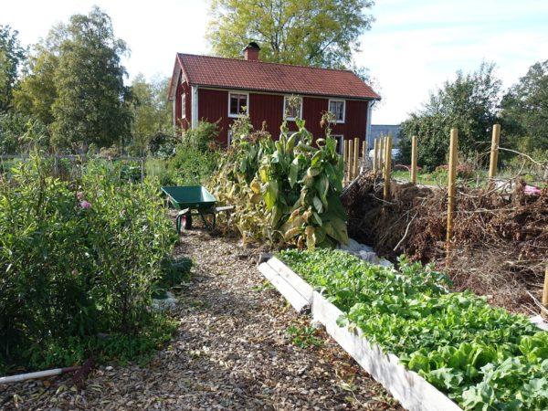 Saras hus och trädgård i oktober.