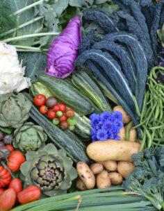 Webbkurser i odling