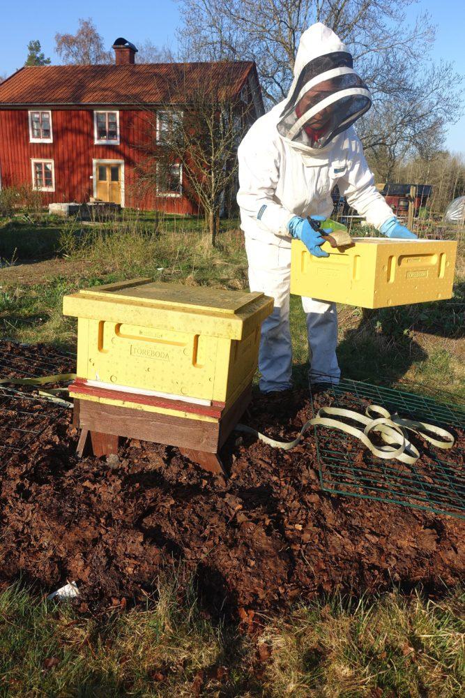 En låda sätts över den första lådan på bikupans.