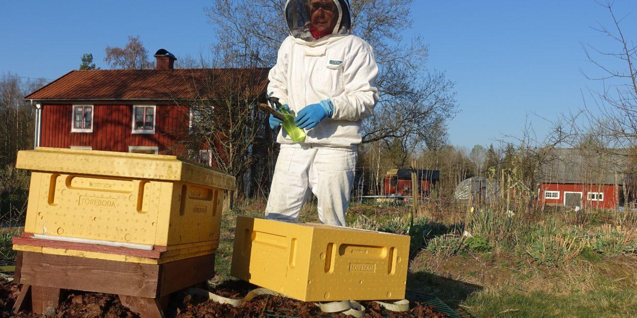 En gul bikupa och en biodlare klädd i vitt.