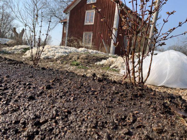 Närbild på en odlingsbädd med bar jord och ett rött hus i bakgrunden.