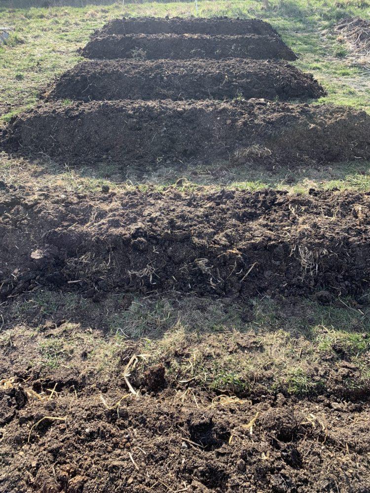 Stående bild med tio fina upphöjda odlingsbäddar.