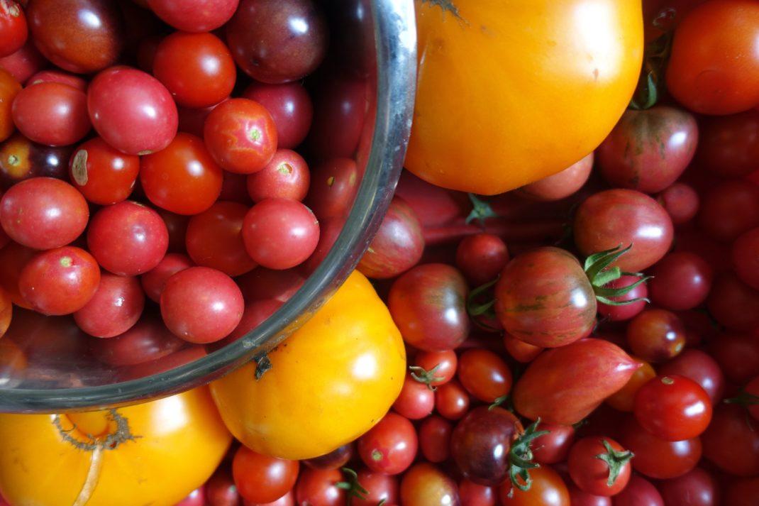 Olika slags tomater fyller ut hela bilden, i röda och gula färger.
