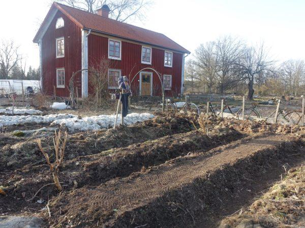 Skillnadens trädgård vinterodlas i februari.