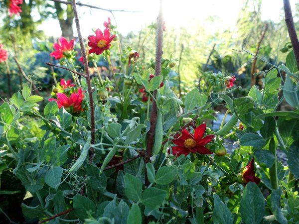 En frodig grön plantering med röda blommor.