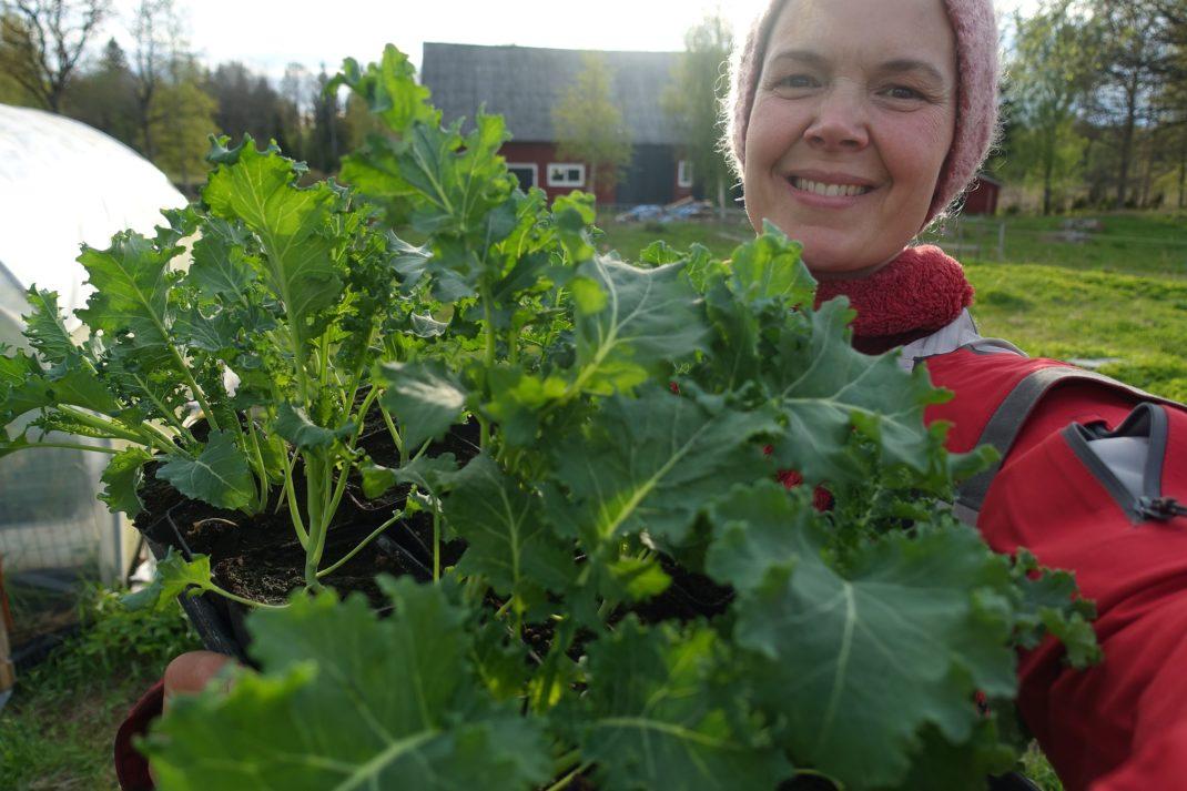 Sara håller ett stort tråg med fina grönkålsplantor framför sig.