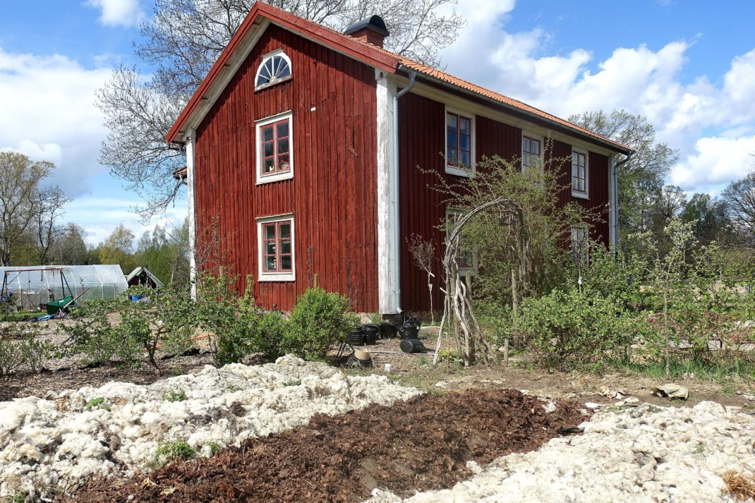 En övergripande bild på en del av köksträdgården, men odlingsbäddar täckta av ull och löv. Huset i bakgrunden.