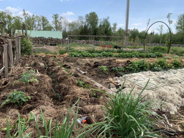 en vårlig köksträdgård med mycket material över bäddarna.