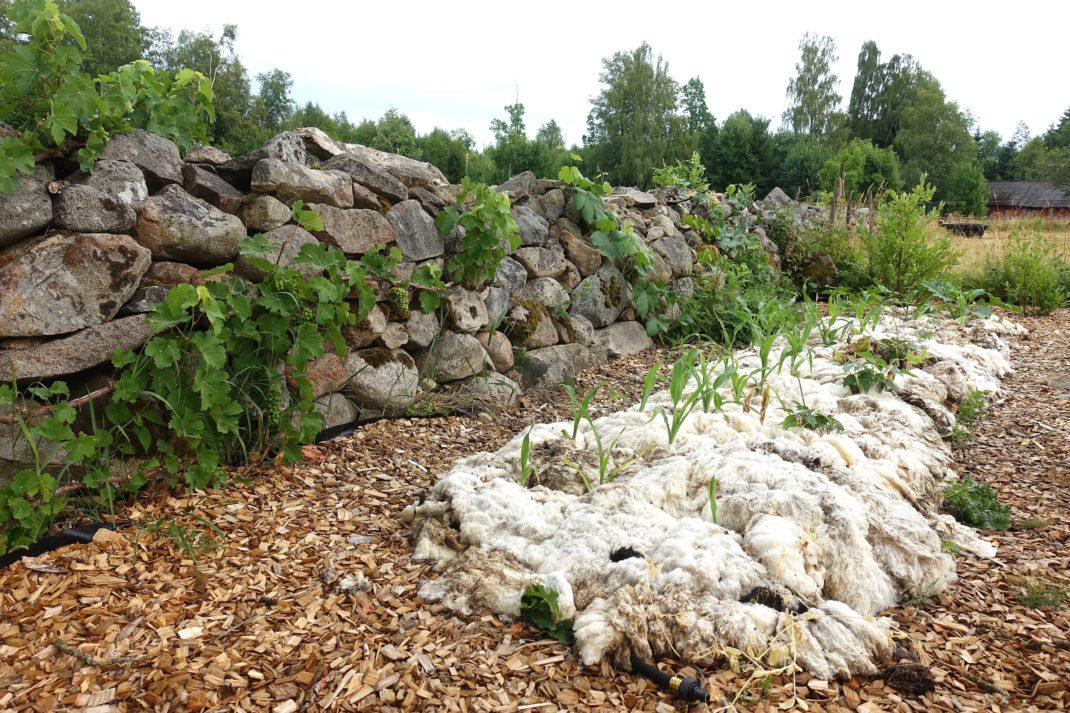 En stenmur med en lång odlingsbädd täckt med ull nedanför.