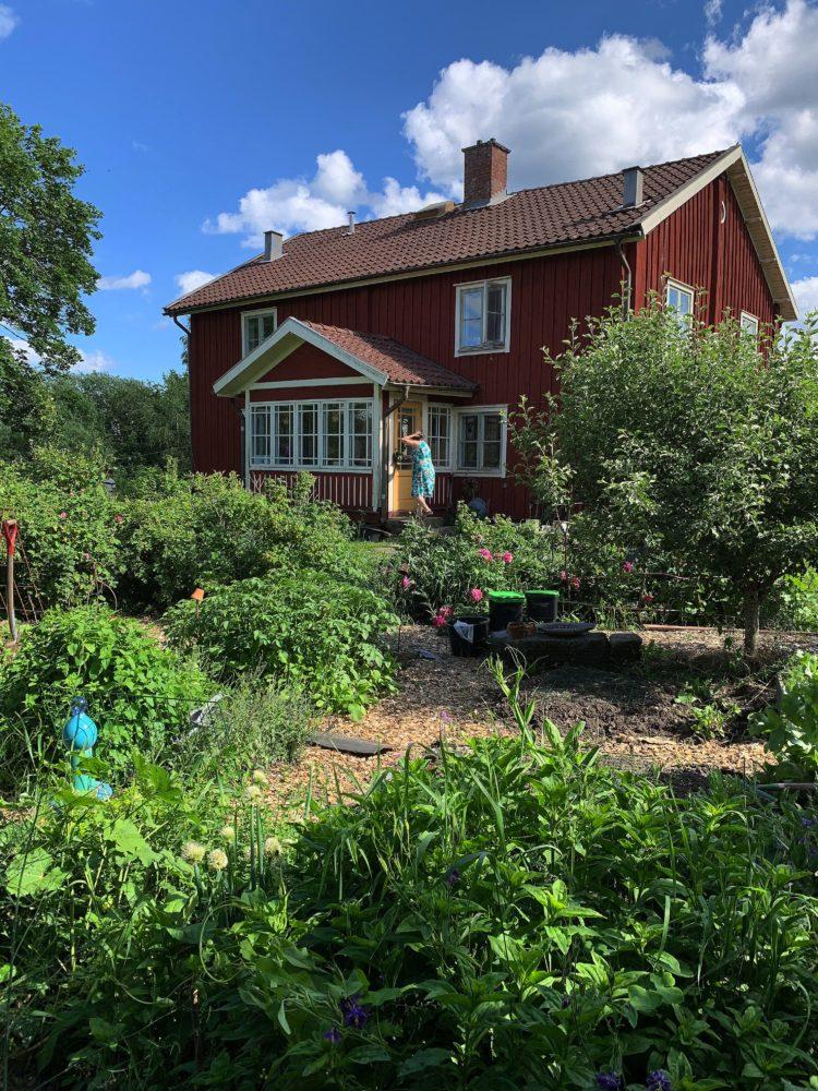 En köksträdgård med många växter och i bakgrunden ett rött trähus i två våningar.