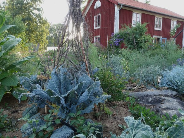 En prunkande grön köksträdgård med ett rött bostadshus i bakgrunden.