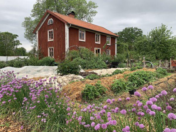 En köksträdgård framför ett falurött hus.
