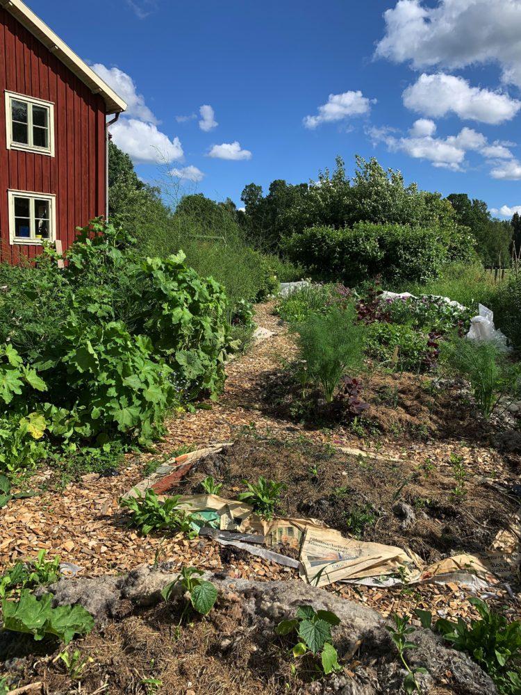 En frodig och lite stökig odlingsplats med ett stort rött hus i bakgrunden.