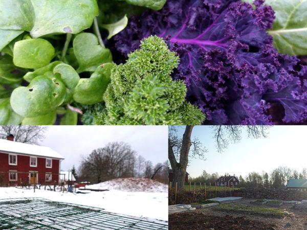 Kollage av bilder på vinterodling