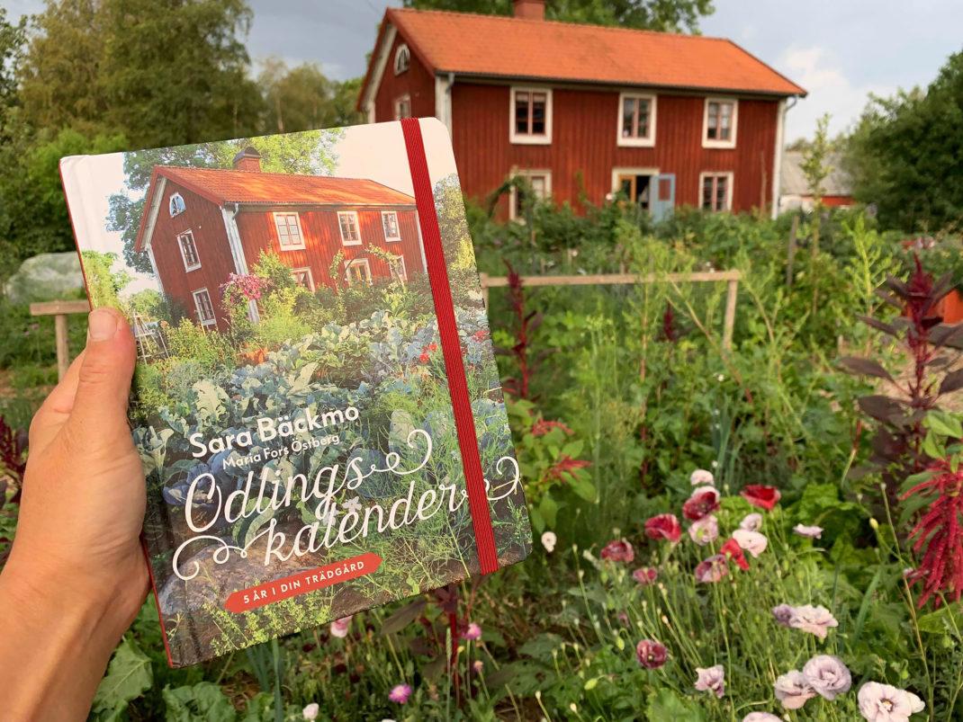 Saras hand håller upp boken 'Odlingskalender' framför sitt hus - samma vy som omslaget på boken visar.