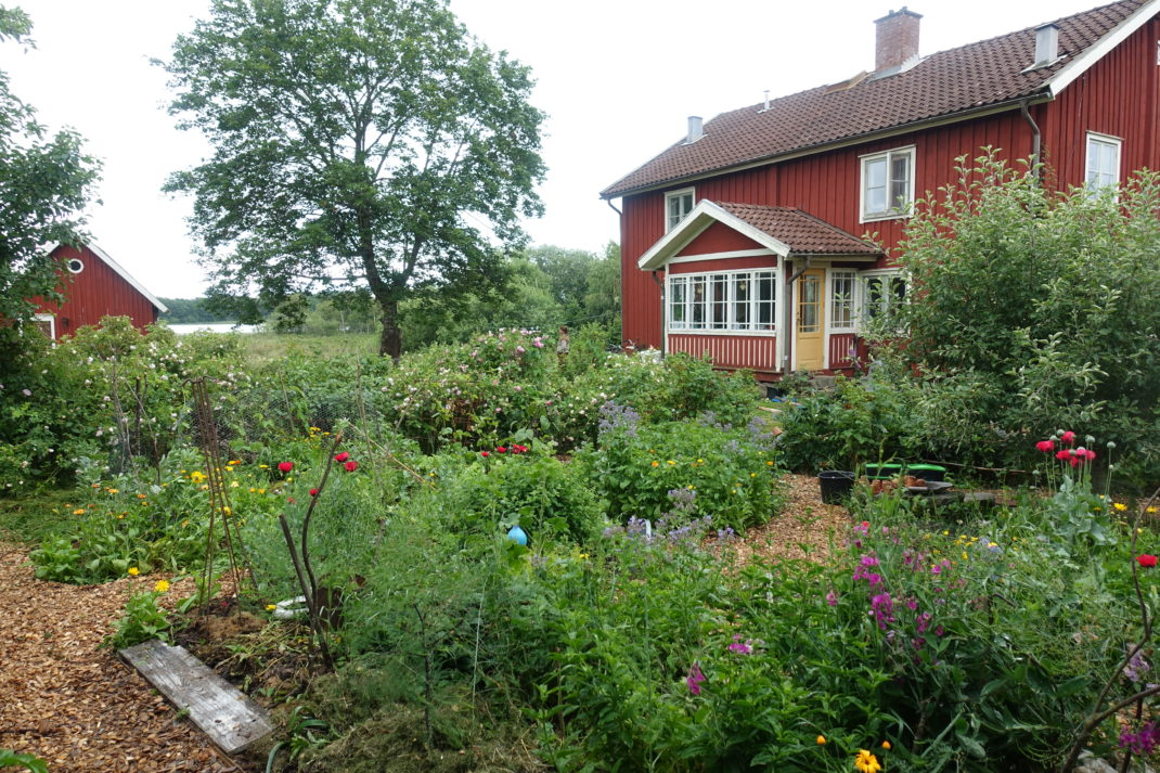 En lummig köksträdgård med massa buskar och ett fint rött hus i bakgrunden.