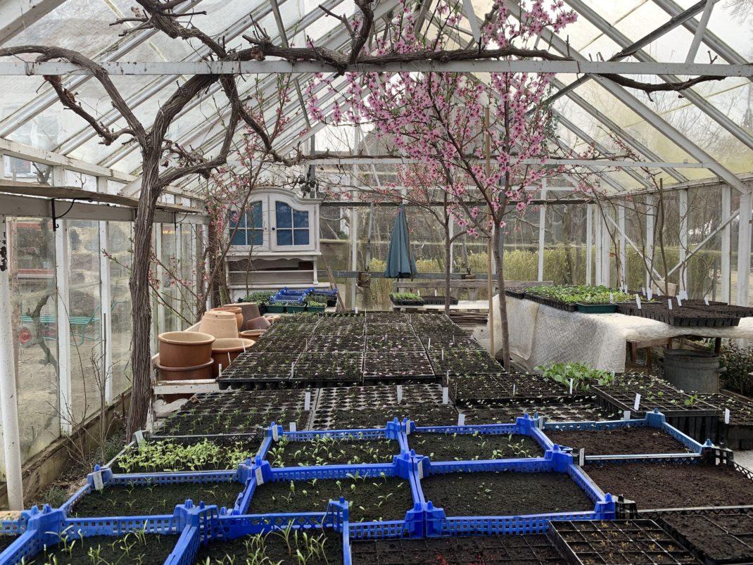 Massor av backar och tråg i ett växthus.