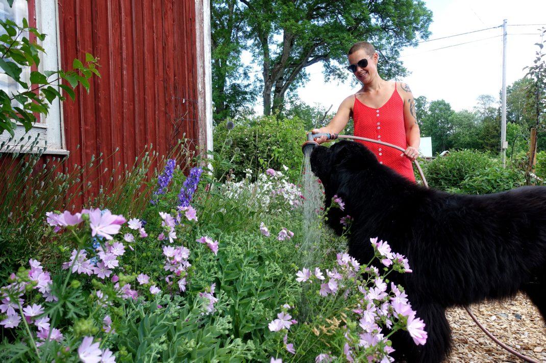 Sara vattnar blommorna och en jättestor svart hund står bredvid och lapar vatten.
