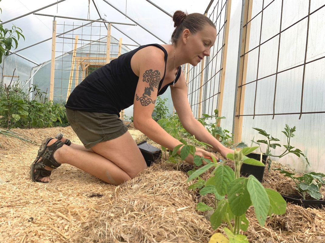 En tjej sitter och planterar på knä i ett växthus.