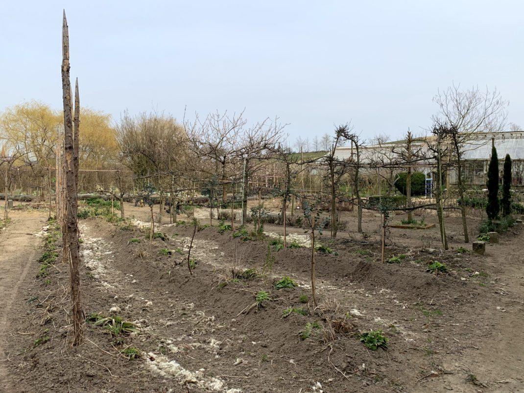 Upphöjda bäddar med jord.
