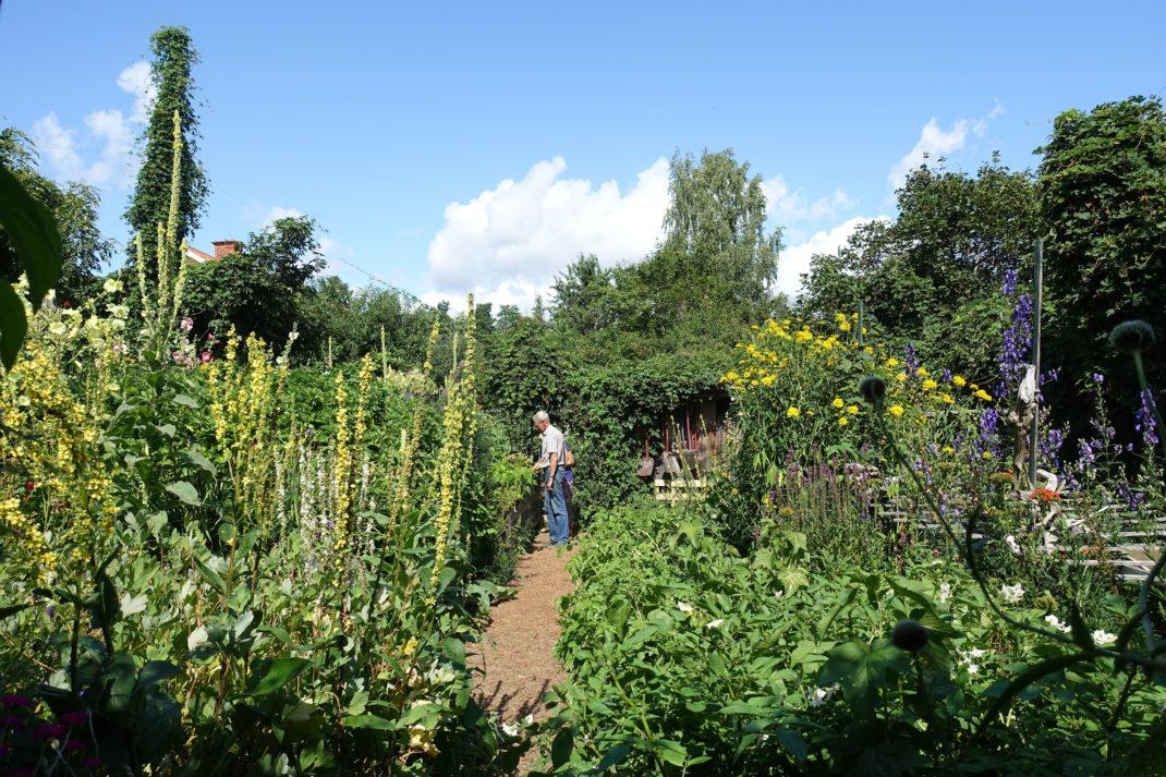 En enorm växtkraft med höga växter och blomspiror mot en blå himmel