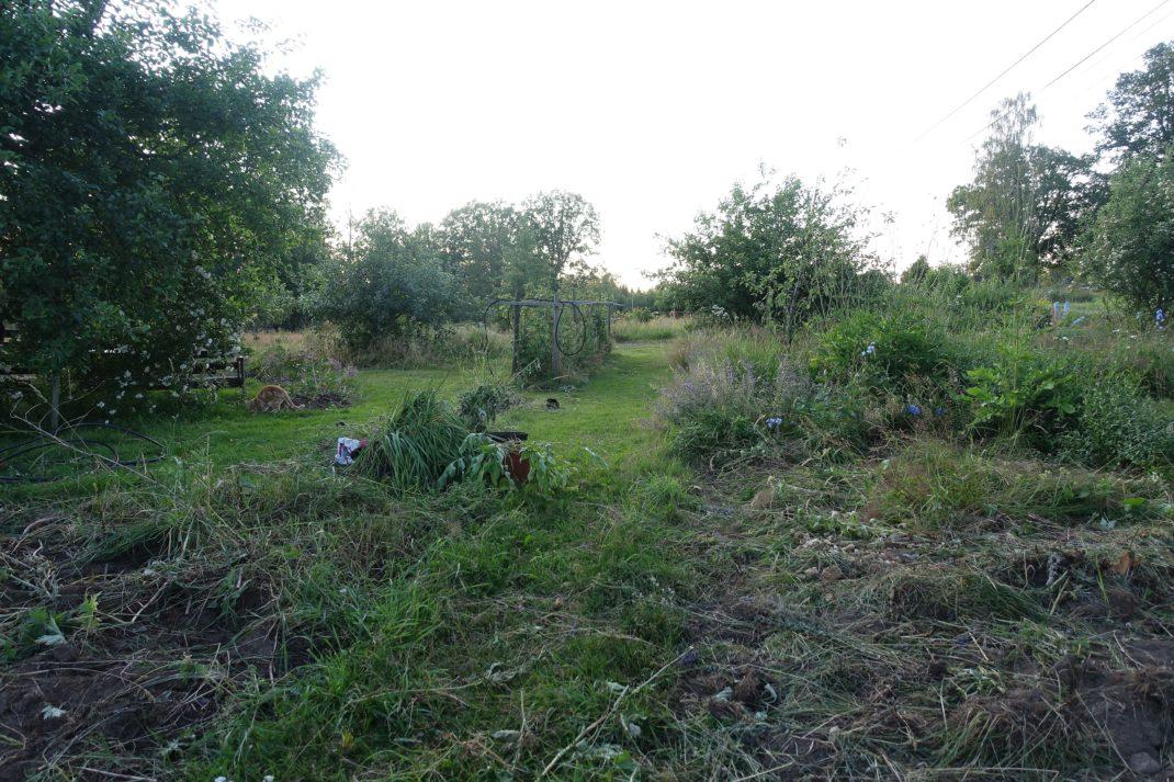 En fullständigt kraschad gräsmatta och forna perennland.